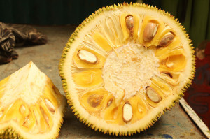 A jackfruit from Up in the hill Chocolate farm