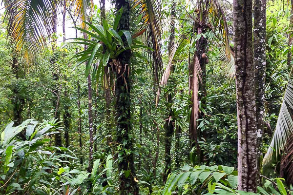 The forest at up in the hill eco lodge in Panama