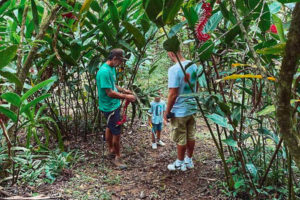 The tour of the chocolate tour in Bocas del Toro at Up in the Hill.